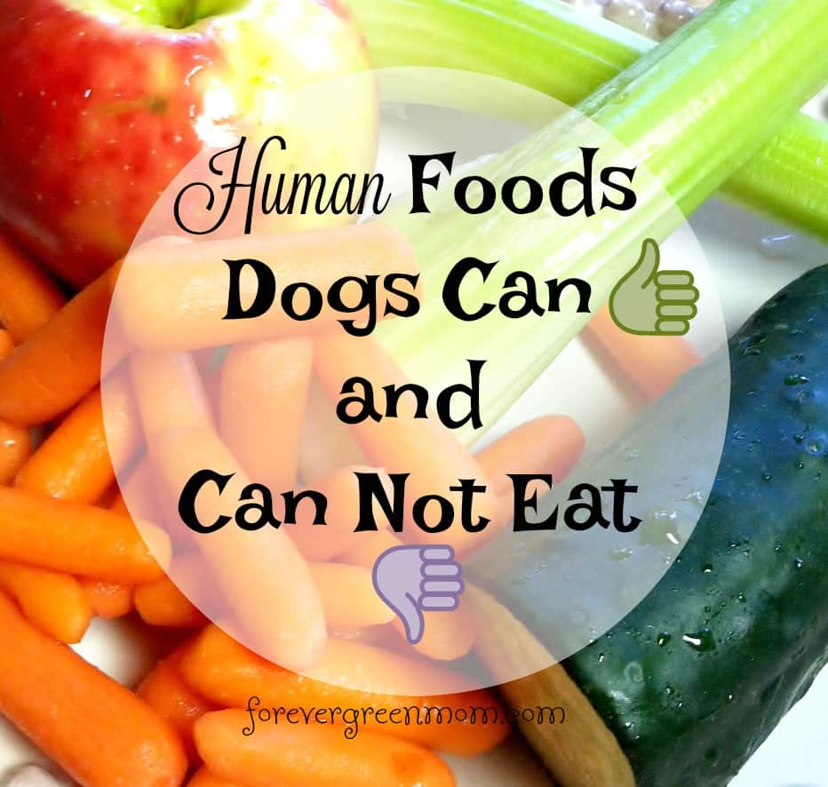List Of Human Food Dogs Can