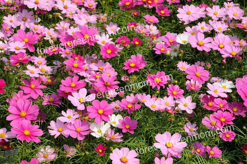 Hard to Kill Flowers for Your Garden